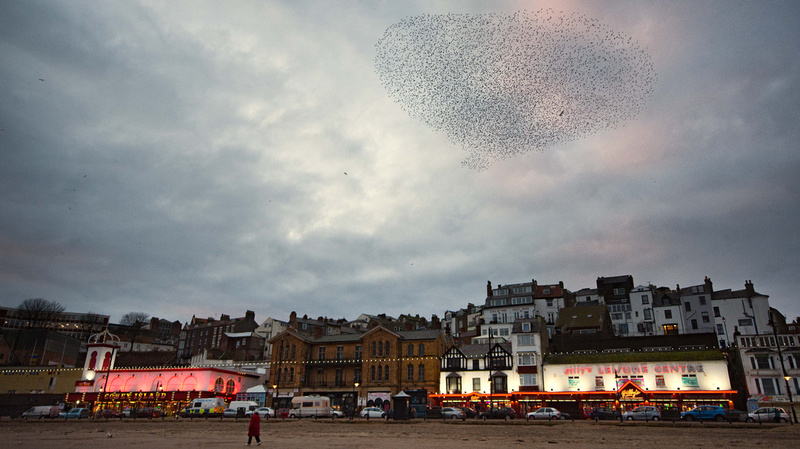 Starling Murmuration over Scarborough